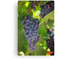 Chelan Blue Grapes Canvas Print