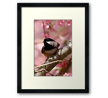Curious Chickadee Perched Before Pink Blossoms Framed Print