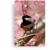 Curious Chickadee Perched Before Pink Blossoms Metal Print