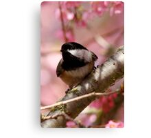 Curious Chickadee Perched Before Pink Blossoms Canvas Print