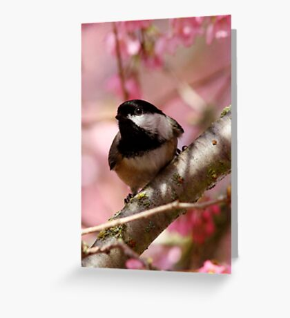 Curious Chickadee Perched Before Pink Blossoms Greeting Card