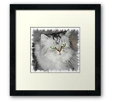 Precious Misty: Framed Print