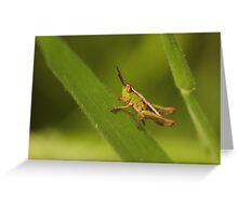 Tiny Hopper Greeting Card