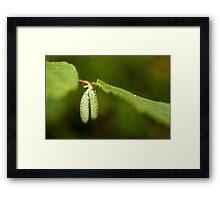 Hazel Catkins Framed Print