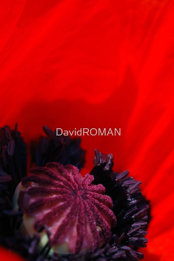 I dream of you by DavidROMAN