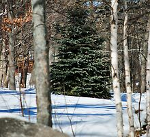 Sticks and Stones Look Lovely in Snow by Kathy Nairn
