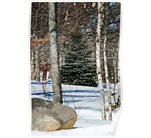 Sticks and Stones Look Lovely in Snow Poster