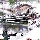 River of Dreams by Kathy Nairn
