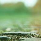 cobbles by Purplecactus