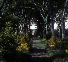 Country lane near Aberdeen, Scotland by nealbarnett