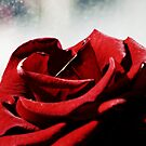 Red Rose by Ms-Bexy