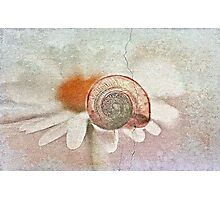 Life is so fragile Photographic Print