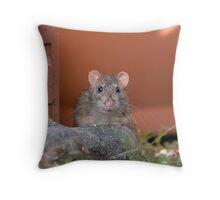 brown rat in the garden Throw Pillow