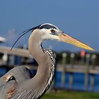 Blue Heron Closeup by Linda Godfrey