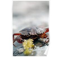 Crabs need meals too, lunch time at the beach Poster