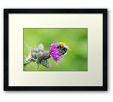 Bee on a Thistle Framed Print