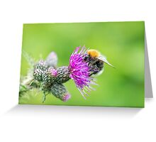 Bee on a Thistle Greeting Card