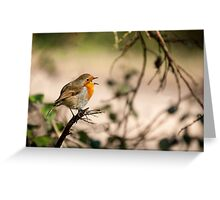 Robin Singing on a Branch Greeting Card