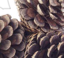 Pine Cones Sticker