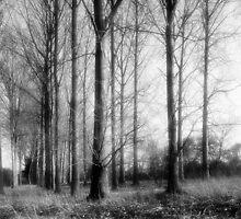 Suffolk Woodland - Monochrome landscape by Nick Bland
