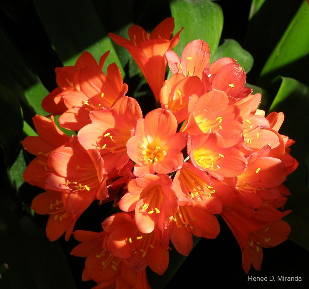 Orange Flowers by Renee D. Miranda