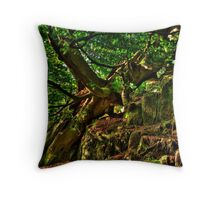 Old beech tree in wind Throw Pillow