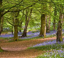 Bluebell Woods in Spring by Nick Jenkins