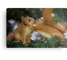 Baby Squirrel Kiss Metal Print