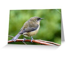 My Mate Is More Handome  - Female Bellbird - NZ Greeting Card