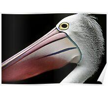 A Pelican Portrait Poster