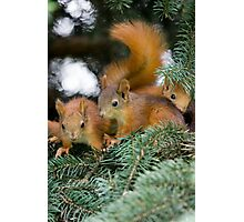 Baby Squirrel Play Photographic Print