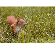 Baby Squirrel Photographic Print
