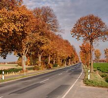 Road to B. - HDR by Stefanie Köppler