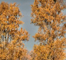 Poplars - HDR Sticker
