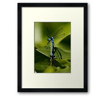 Double Damselfly Framed Print