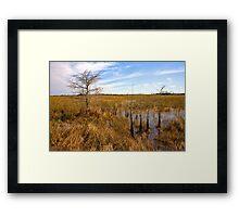 Cypress Stand Framed Print