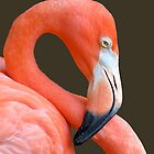 Flamingo by Nick Conde-Dudding