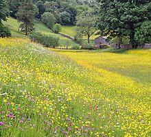 Flower Meadows near Muker by Nick Jenkins