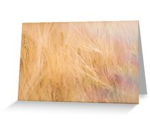 Golden field of Wheat Greeting Card