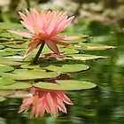 Pink Lotus Reflection by Nick Conde-Dudding