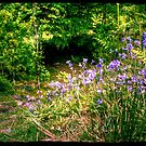 Bluebell path by Ms-Bexy