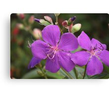 Tibouchina Jules Canvas Print
