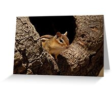 Chipmunk in tree hole - Ottawa, Ontario Greeting Card