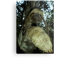 The Sloth Metal Print