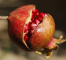 Pomegranate by franceslewis