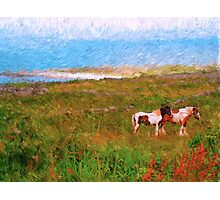 Irish Ponies Photographic Print