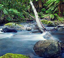 Rainforest Stream by Ben Stevens