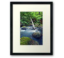 Rainforest Stream Framed Print