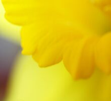 Don't You Love Spring? by Corkle