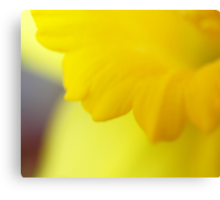Don't You Love Spring? Canvas Print